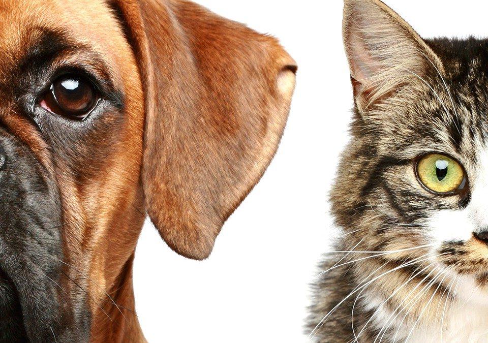 Em pauta: Projeto que institui a política municipal de controle de natalidade de cães e gatos!
